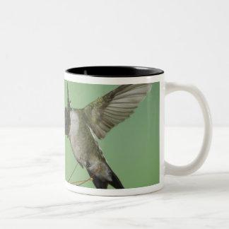 ルビーthroatedハチドリ、Archilochus 2 ツートーンマグカップ
