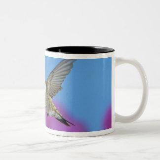 ルビーthroatedハチドリ、Archilochus 4 ツートーンマグカップ