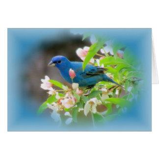 ルリノジコの青 グリーティングカード