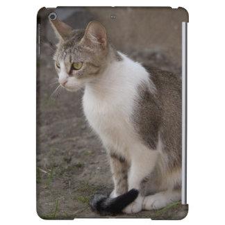 ルーマニア、トランシルバニア、Sighisoara。 ペット猫