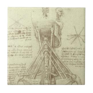 レオナルド・ダ・ヴィンチ著人間の解剖学の脊柱 タイル