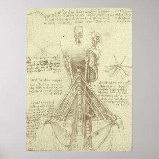 レオナルド・ダ・ヴィンチ著人間の解剖学の脊柱 ポスター