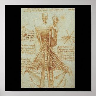 レオナルド・ダ・ヴィンチc. 1515年著首の解剖学 ポスター