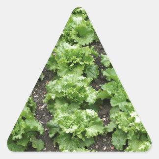 レタスの庭 三角形シール