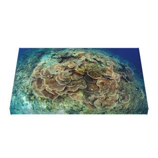 レタスの珊瑚礁の眺めのキャンバス キャンバスプリント