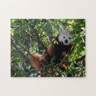 レッサーパンダのパズル- Lounging ジグソーパズル