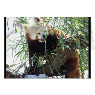 レッサーパンダの開いた口 カード