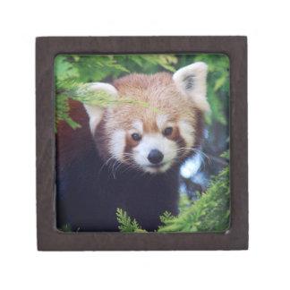 レッサーパンダ ギフトボックス