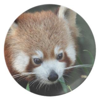 レッサーパンダ、Tarongaの動物園、シドニー、オーストラリア プレート