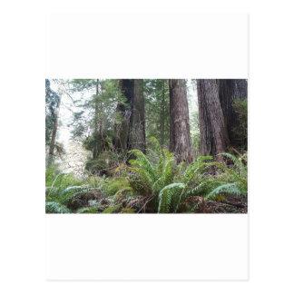 レッドウッドの国有林の剣シダ ポストカード