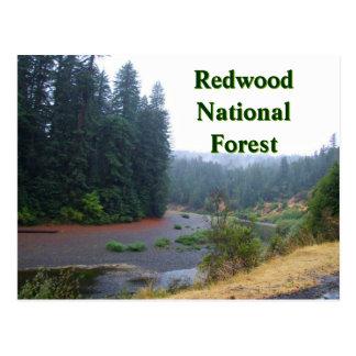 レッドウッドの国有林 ポストカード