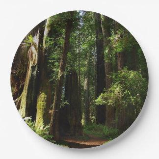 レッドウッドの国立公園のレッドウッドそしてシダ ペーパープレート