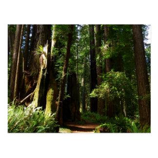 レッドウッドの国立公園のレッドウッドそしてシダ ポストカード