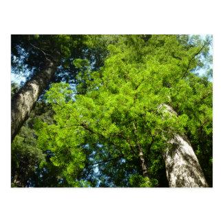 レッドウッドの国立公園のレッドウッドの大枝 ポストカード