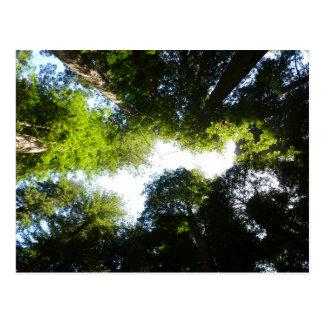 レッドウッドの国立公園のレッドウッドの木の円 ポストカード