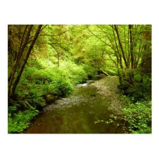 レッドウッドの国立公園の無くなった人の入り江I ポストカード