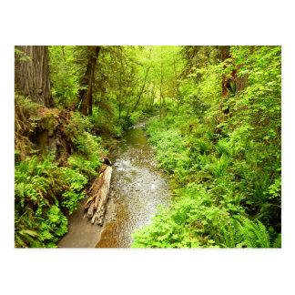 レッドウッドの国立公園の無くなった人の入り江II ポストカード