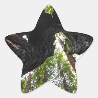 レッドウッドの木およびトランク 星シール