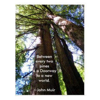 レッドウッドの木のMuirの引用文 ポストカード