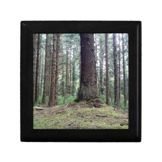 レッドウッドの木 ギフトボックス
