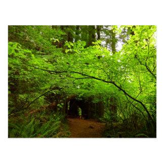 レッドウッドの森林のカエデの木 ポストカード