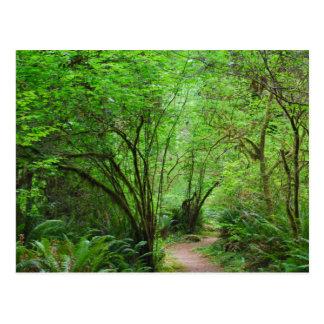 レッドウッドの森林の道 ポストカード
