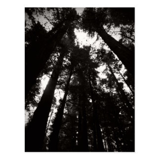 レッドウッドの森林 ポストカード