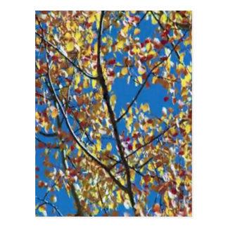 レッドウッドの海岸アメリカからの木 ポストカード