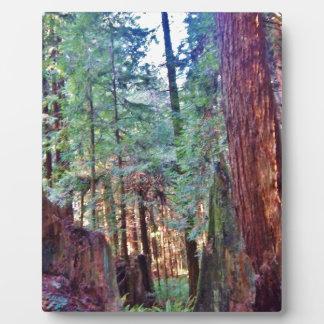 レッドウッドシリーズ#2: 木を通して フォトプラーク