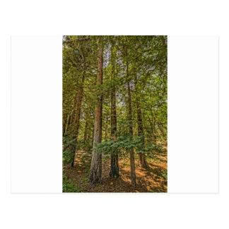 レッドウッド果樹園 ポストカード