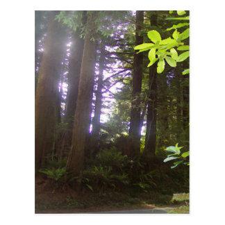 レッドウッドDriveby ポストカード