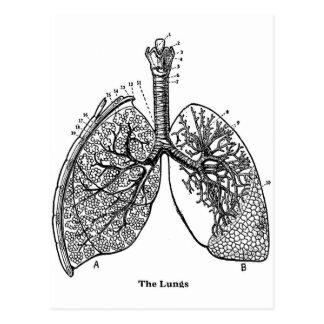 レトロのヴィンテージの低俗な解剖学の医学の肺 ポストカード