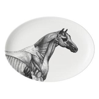 レトロの馬筋肉解剖学の写真 磁器大皿