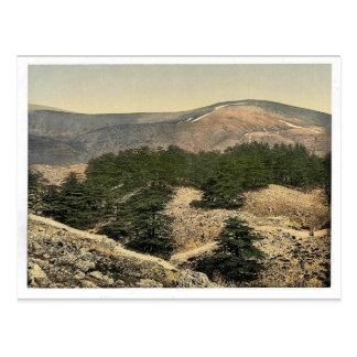 レバノン、レバノンのヒマラヤスギの一般的な見解、Ho ポストカード