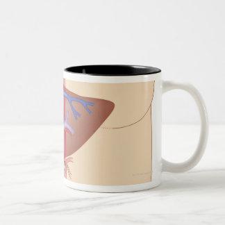 レバー移植のプロシージャ ツートーンマグカップ