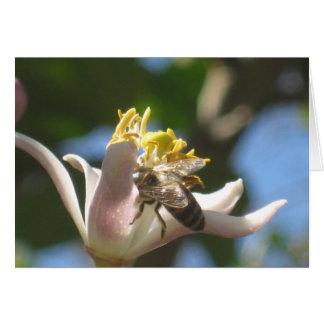 レモン花および蜂蜜の蜂Notecard カード