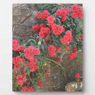 レンガ壁、スペインで上っている赤いバラ フォトプラーク