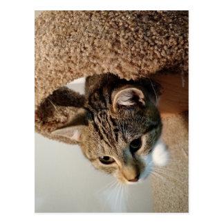 レーンジャー猫 ポストカード