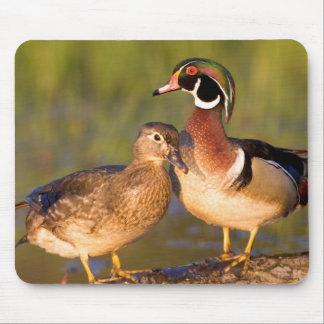 ログインの沼地のアメリカオシそして女性 マウスパッド
