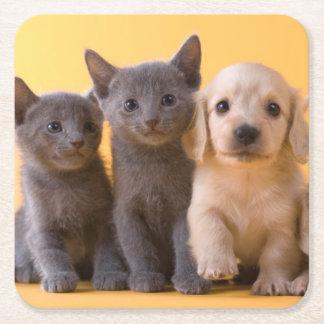 ロシアので青い子ネコおよびダックスフントの子犬 スクエアペーパーコースター