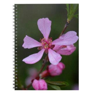 ロシアのなアーモンド木の花 ノートブック