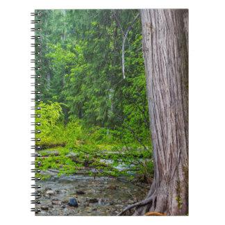 ロスの入り江のヒマラヤスギの景色を楽しめるエリア ノートブック