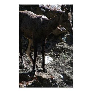 ロッキー山脈のオオツノヒツジ、雌ヒツジ 便箋