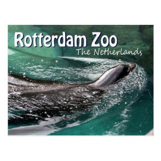 ロッテルダムの動物園のDiergaarde Blijdorpの水泳のシール ポストカード