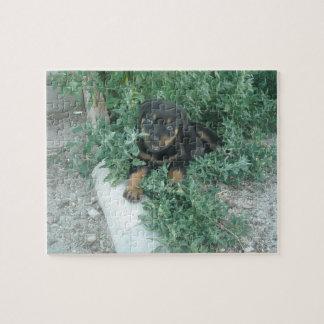 ロットワイラーの子犬の写真 ジグソーパズル