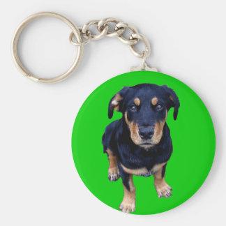 ロットワイラーの子犬の黒の日焼け犬のアイ・コンタクト キーホルダー