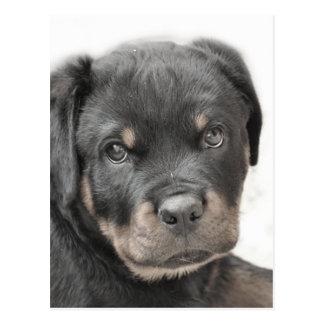 ロットワイラーの子犬 ポストカード