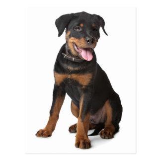 ロットワイラーの小犬のブランクの郵便はがき ポストカード