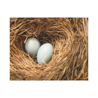 ロビンの卵が付いている新しい始めの鳥の巣 キャンバスプリント