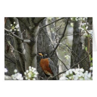 ロビン及びブラッドフォードのナシ木の花、春 カード